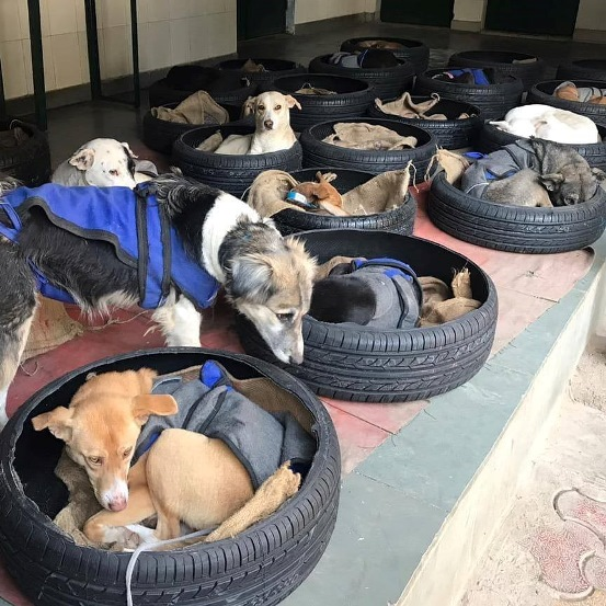Photo of Yokohama donated Scrap Tyres to be Re-Used as Dog Beds